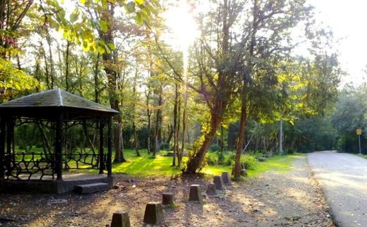 پارک جنگلی فین چالوس عکس و فیلم، نقشه و آدرس، نظرات | سلطان سفر