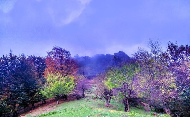 جنگل نقله بر رشت- قزوین