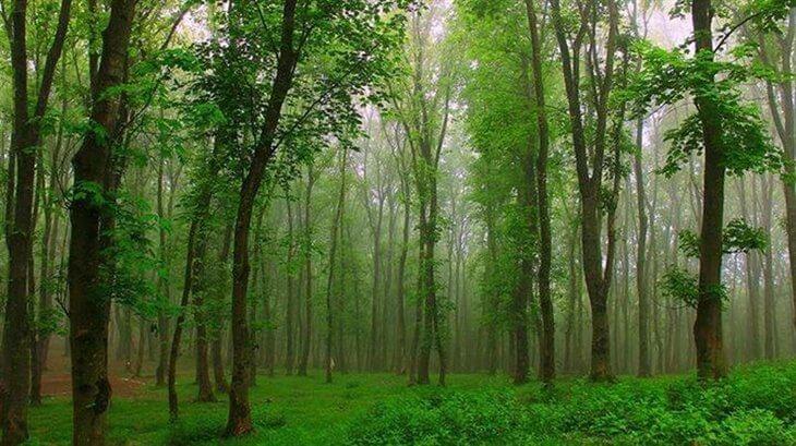 جنگل گیسوم گیلان