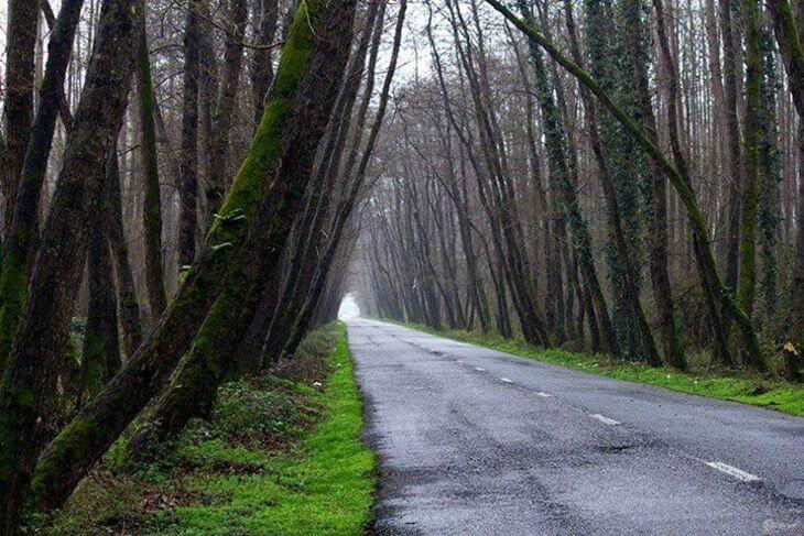 پارک جنگلی صفرابسته