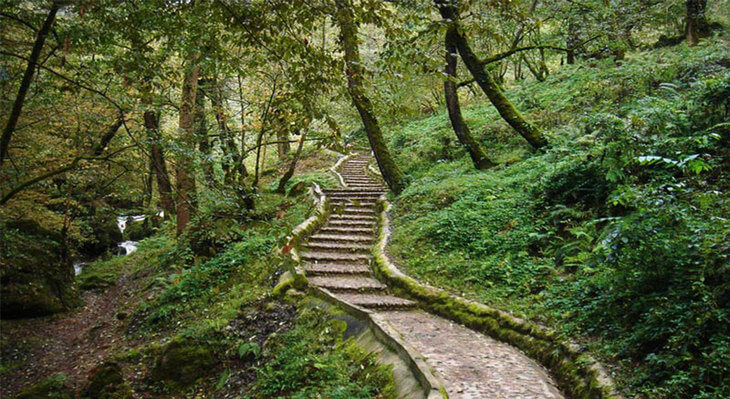 پارک جنگلی در ماسوله